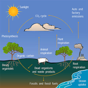 the effects of fossil fuel on the environment