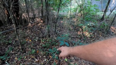 SEARCHING FOR AN OLD SLAVE CEMETERY (AND NATIVE AMERICAN BURIALS)